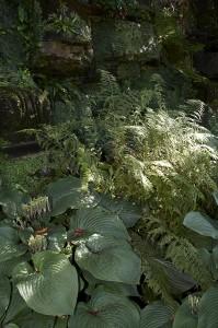 Hosta Shade Garden - AAA Reick's Landscaping