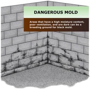 Wet basements = Black Mold