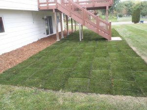 New Sod - Savage, MN