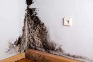 Black mold in basement corner